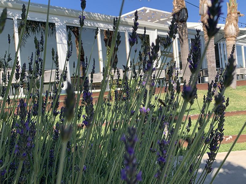 doric-boutique-hotel-farm-erbe-aromatiche-valle-dei-templi-sicily-profumi